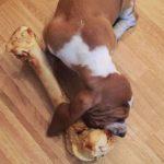 Tasty Retro Hundefutter kaufen | Nestos, Gumprecht, Phillys kaufen